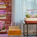 Z čoho si vyrobiť vertikálnu záhradu na balkóne alebo vo dvore?