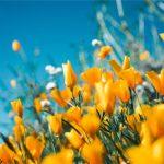 Využite voľný čas na plánovanie nového jazierka na vašej záhrade